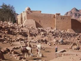Bedoeinen bij Sinai
